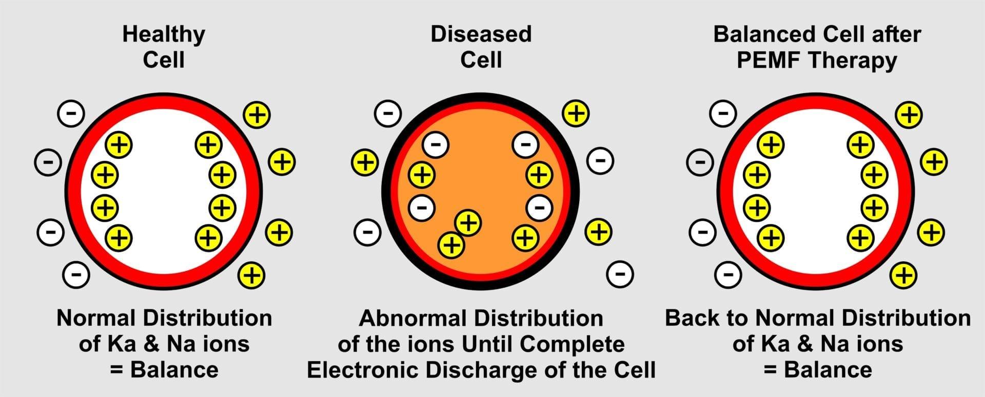 Cell ion diagram-PEMF Health Inc.